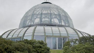 Les serres royales de Laeken ouvriront leurs portes dès le 21 avril