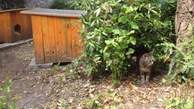 Ch'Abbaye : Un village pour chats à Forest