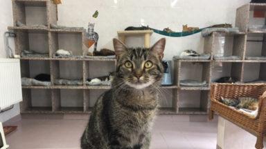 Watermael-Boitsfort : une prime de 25 à 50 euros pour stériliser votre chat