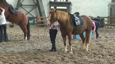 Les Brussels horses days se tiennent à Tour et taxis