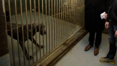 La Région bruxelloise renforce sensiblement les sanctions pour maltraitance aux animaux