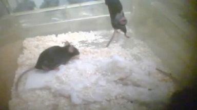 Maltraitance animale : la VUB veut un nouveau labo