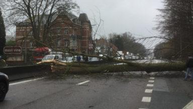 Un arbre est tombé sur le Ring de Bruxelles à Hoeilaart