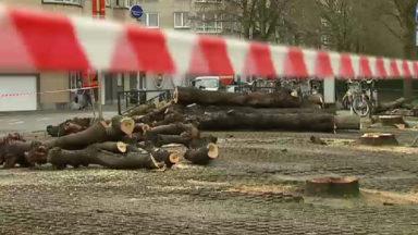 Koekelberg : 50 arbres abattus avenue de la Liberté