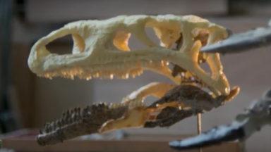 Sauvez Ben, le plus vieux dinosaure bruxellois !