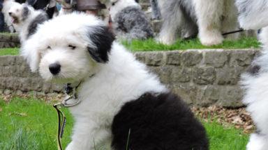Une prime pour stériliser votre chien à Bruxelles-Ville