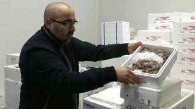 Economie : Crustabru, la dernière née de l'entreprise «Grandes marées»
