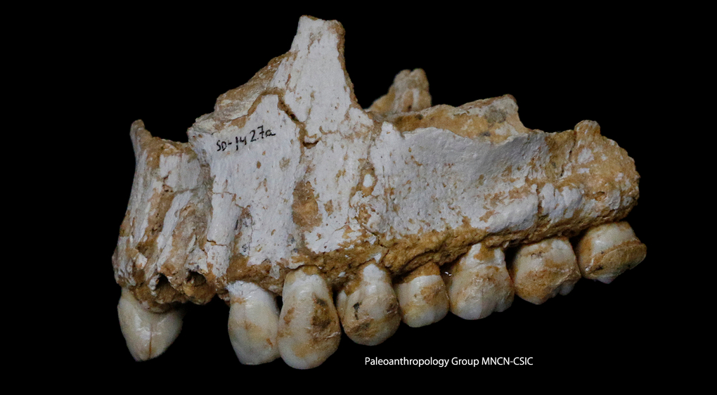 tartre_dents_neandertaliens