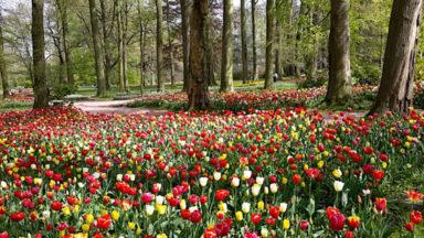 Explosion de couleurs aux «Floralia Brussels» à Grand-Bigard