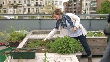 Cultiver son petit potager… en plein cœur de Bruxelles