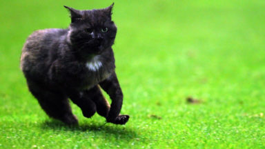 Des chats illégalement importés du Maroc provoquent un risque sanitaire lié à la rage en Région bruxelloise