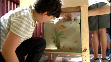 Des jeunes de Molenbeek s'initient à l'aquaponie