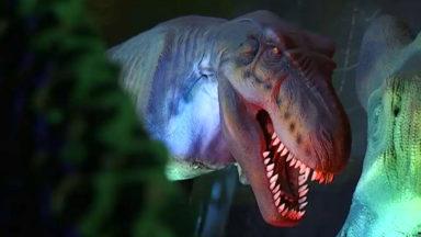 L'univers des dinosaures se dévoile une nouvelle fois à Brussels Expo, au Heysel