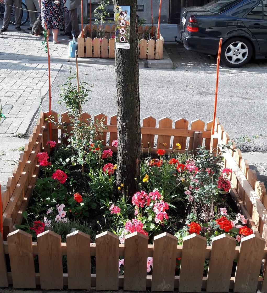 Pied d'arbre - Bruxelles - Rue Albert