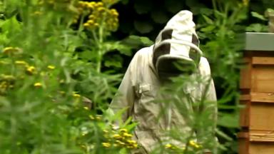 La commune de jette lance son propre miel