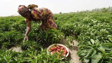 Le Festival Alimenterre à la rencontre des agriculteurs du monde du 9 au 24 octobre