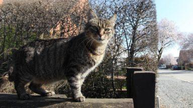 Plus de 90.000 euros débloqués pour la stérilisation des chats en Région bruxelloise