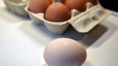 L'Afsca rappelle des œufs bio contaminés aux PCB
