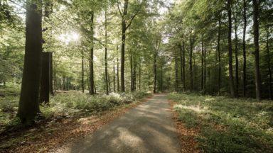 200 arbres déracinés en forêt de Soignes à cause de la tempête Ciara