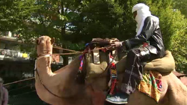 Un chameau dans un parc de Saint-Josse