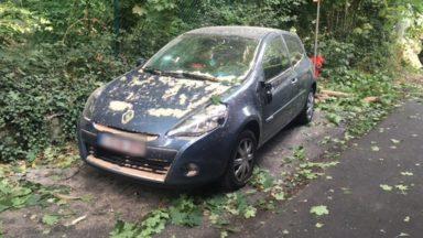 Plus de 100 interventions des pompiers bruxellois : un arbre est tombé sur une voiture et un immeuble à Watermael-Boitsfort