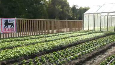 Ixelles : un supermarché commercialise des légumes cultivés sur son toit