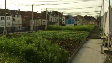 Un potager urbain sur le toit de l'abattoir d'Anderlecht : un projet pédagogique et technologique