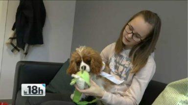 Villa Samson: des patients de l'UZ Brussel trouvent du réconfort auprès de leur animal domestique
