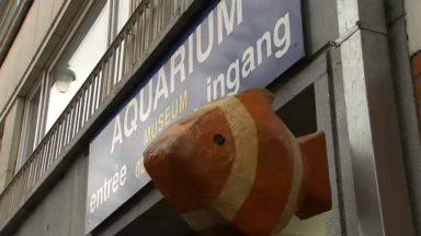 L'aquarium de Bruxelles va fermer ses portes le 7 janvier prochain