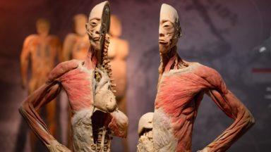 """""""Real Bodies"""" : une exposition à Tour & Taxis pour disséquer et découvrir le corps humain"""