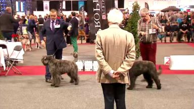 Plus de 4000 chiens à Brussels Expo pour le Brussels Dog Show ce week-end