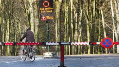 Rafales de vents : les parcs, jardins et bois régionaux fermés