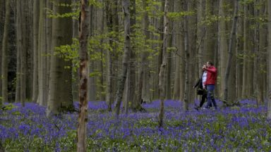 La Flandre rachète au CPAS de Bruxelles des parcelles de forêts en périphérie
