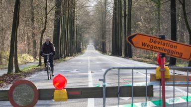 Bois de la Cambre : la ville de Bruxelles en négociation avec la Région pour lui en confier la gestion