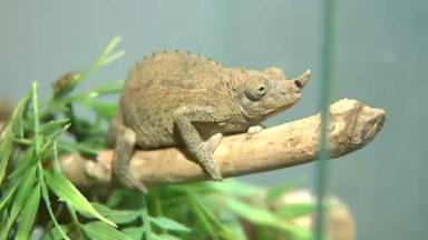 Repti'shop : premier magasin de reptiles à Bruxelles