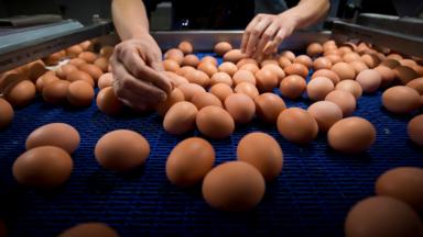 Les entreprises alimentaires contournent l'Afsca via les laboratoires étrangers