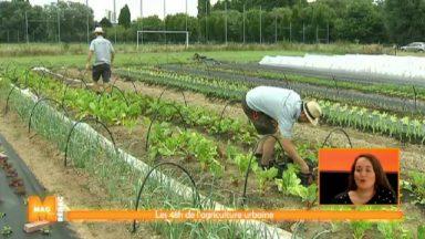 L'agriculture urbaine a le vent en poupe à Bruxelles