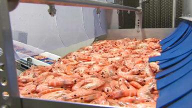 Economie : la seule usine de cuisson de crevettes du Bénélux ouvre à Bruxelles