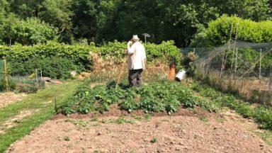 Ixelles : le projet d'urbanisation des potagers Ernotte définitivement enterré