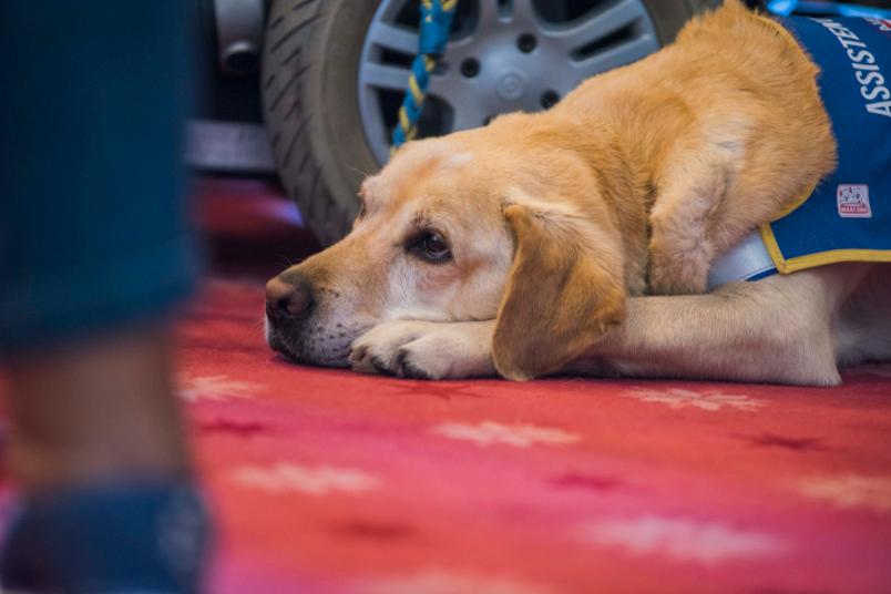 renforcement des lois bruxelloise sur la vente d'animaux - BX1