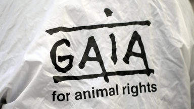 Gaia salue l'interdiction d'abattage sans étourdissement sur des sites temporaires