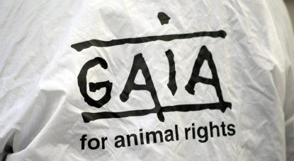 Gaia salue l'interdiction d'abattage sans étourdissement sur des sites temporaires - BX1