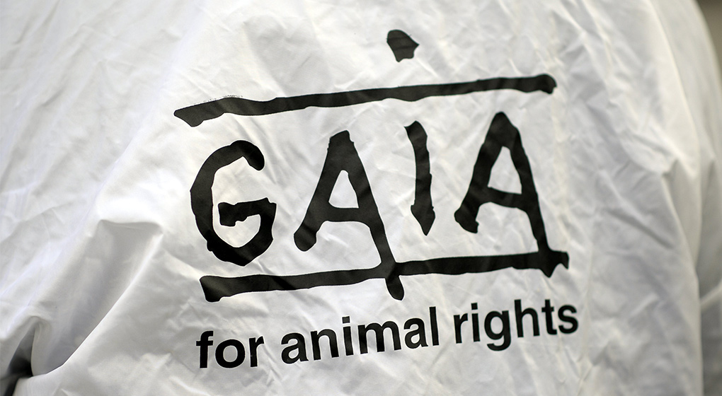 Gaia salue l'interdiction d'abattage sans étourdissement sur des sites temporaires - BX1