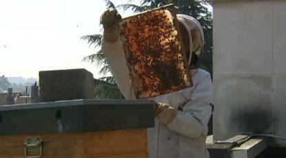 La Région bruxelloise envisage de limiter les ruches, les apiculteurs sont inquiets - BX1
