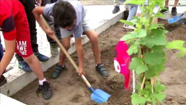 Molenbeek : une nouvelle ferme pédagogique pour enseigner la nature en ville