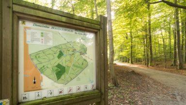 Risque d'incendie à cause de la sécheresse : la forêt de Soignes et les bois du Brabant flamand en alerte jaune