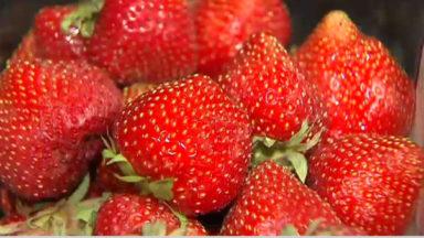Des fraises difformes en grande surface
