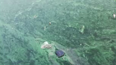 Sécheresse : les poissons meurent et les algues remontent