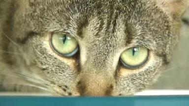Gaia rappelle l'importance de la stérilisation des chats et demande une réduction de la TVA sur les opérations