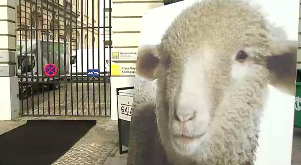 Gaia Mouton - Manifestation Gouvernement bruxellois - BX1
